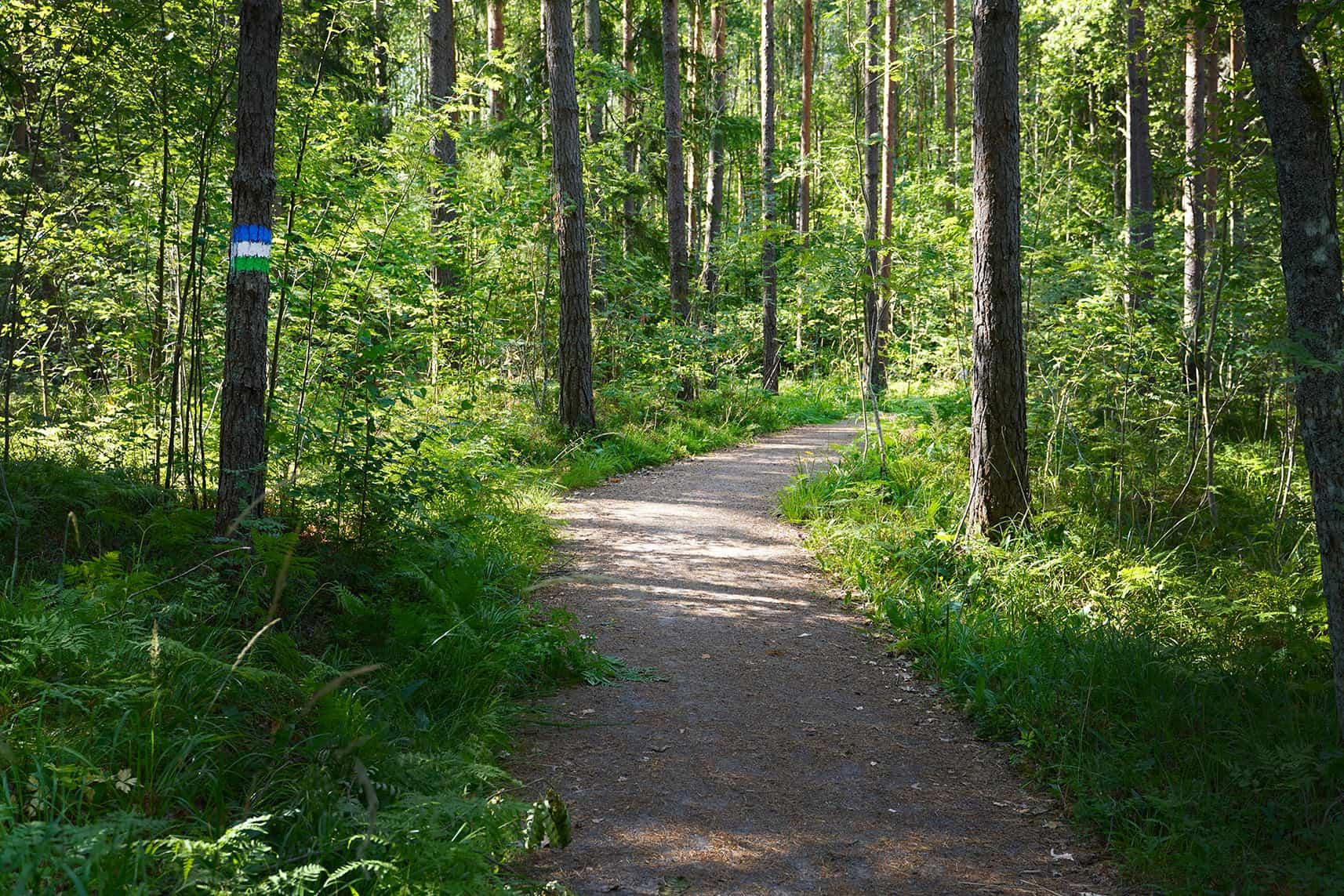 Luontopolku, jonka varrella olevassa puussa näkyy Tammireitistön tunnus.