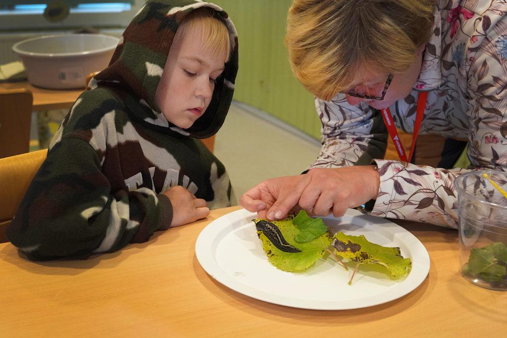 Poika ja nainen tutkivat etanoita.