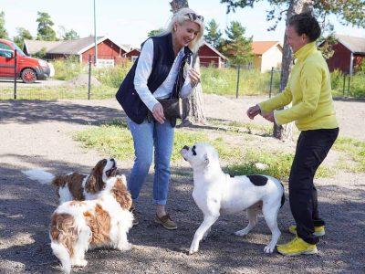Hundparken i Gustavs sammanförde både hundar och människor