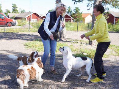 Kustavin koirapuisto saattoi koirat ja ihmiset yhteen