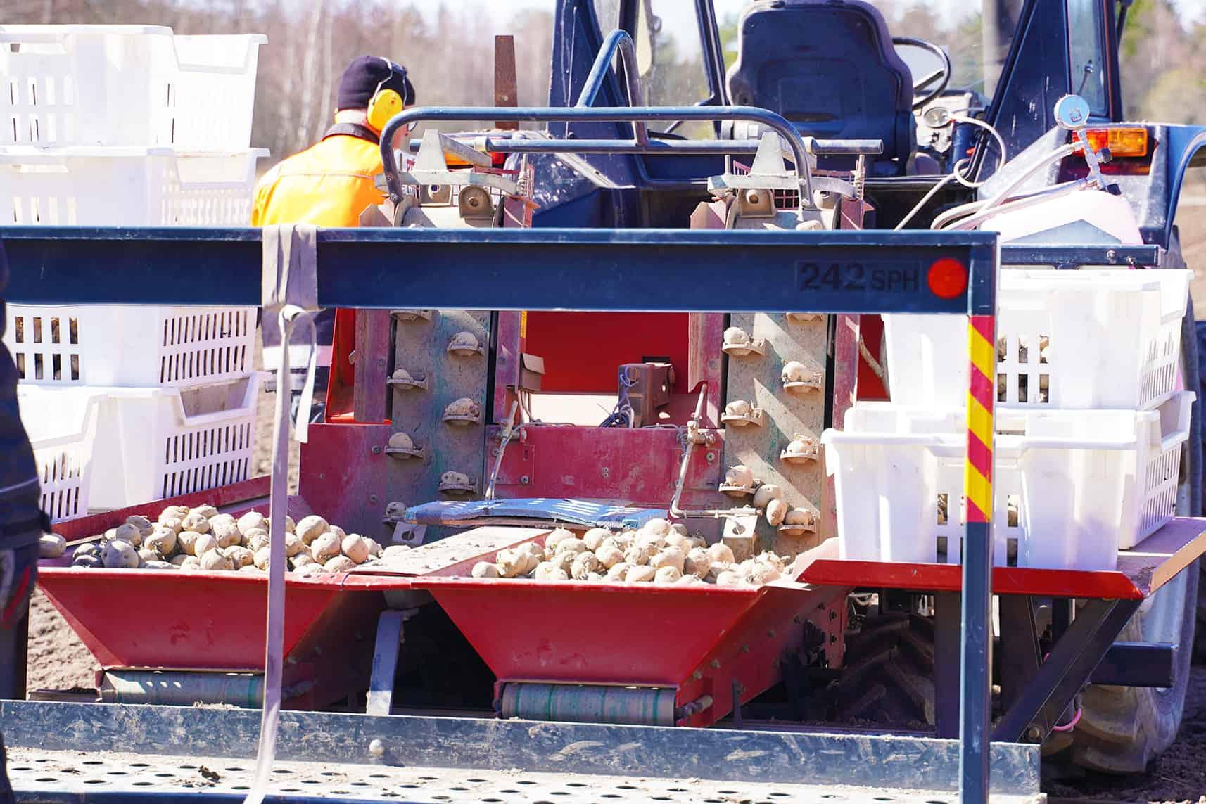 kuva traktorista, jonka kanssa perunaa istutetaan.