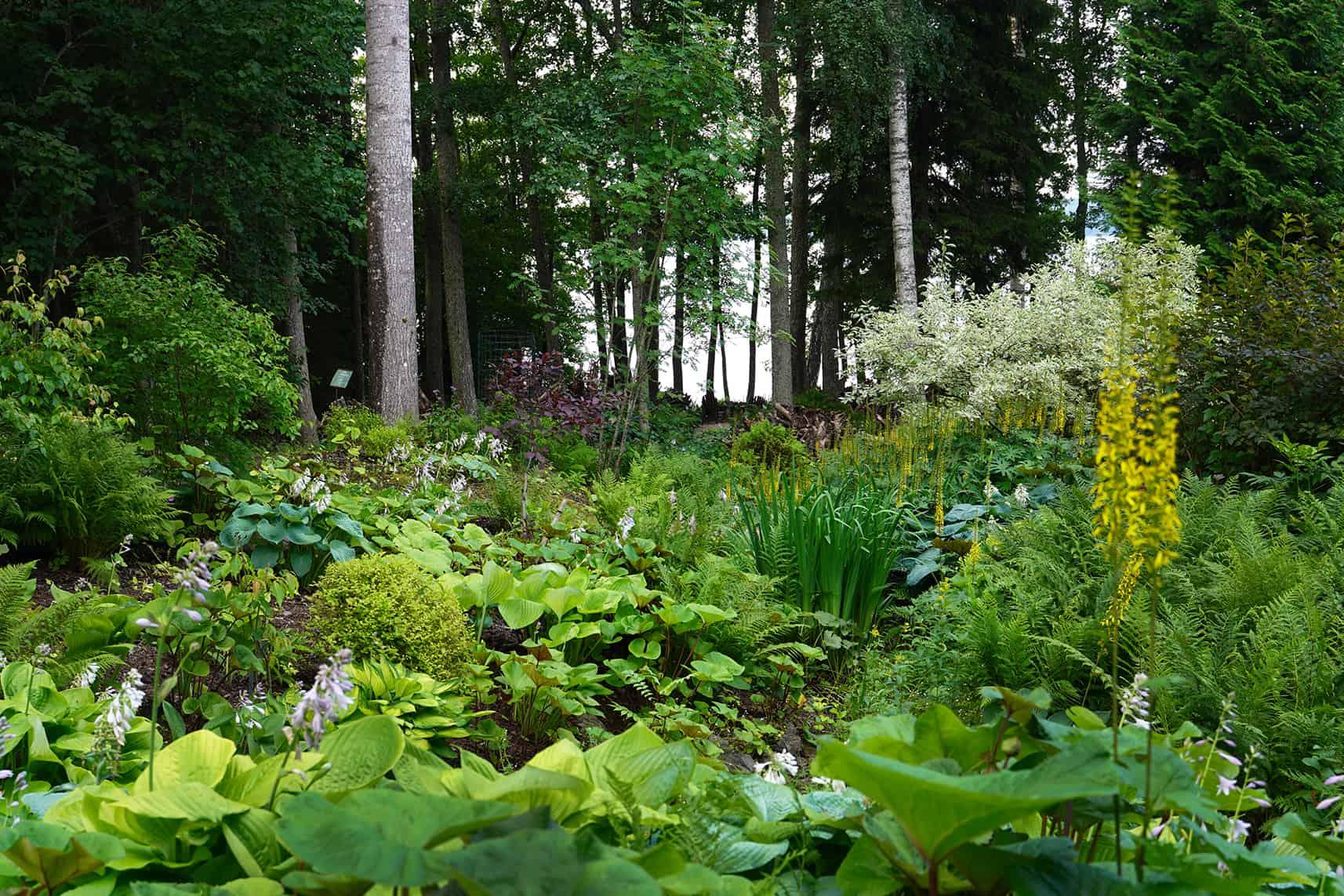 Etualalla kasvillisuutta ja takana pilkottaa puiden välistä järvi.