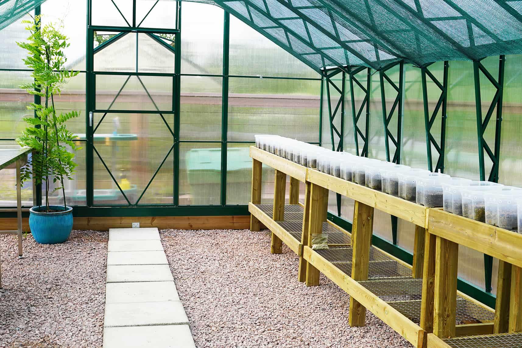 Kasvihuone, jossa oikealla istutuspöytiä.