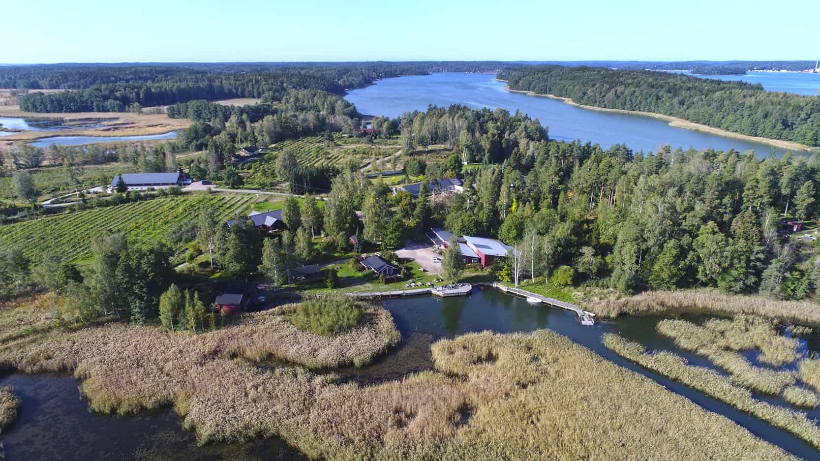 Ilmakuva Tammiluodon Viinitilan rannasta, joka on täynnä jörviruokoa.