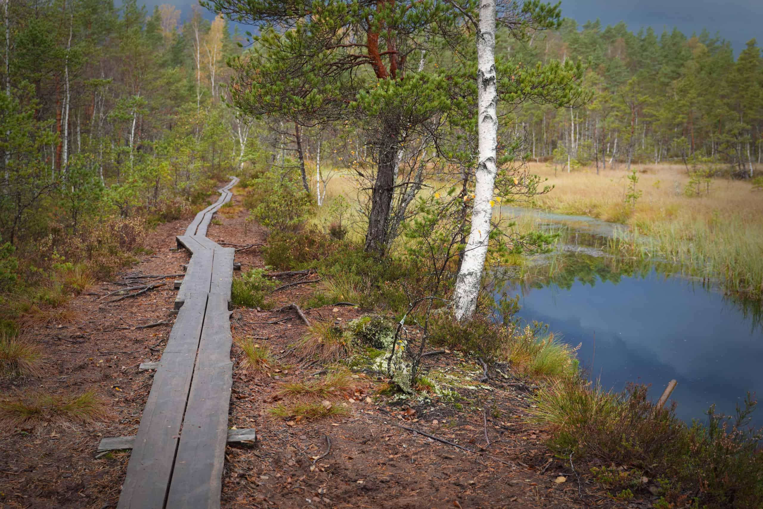 Outdoor Leader -hanke järjestää kaksi webinaaria luontomatkailusta ja reitistöistä 18.3. ja 15.4.