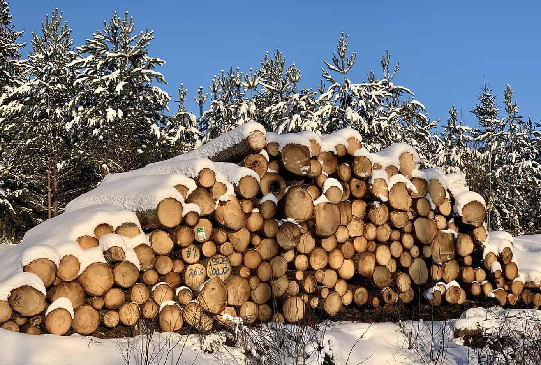 Varsinais-Suomi on kuin villiaitta! Metsäbiotalouteen tavoitellaan kasvua Leader-hankkeella